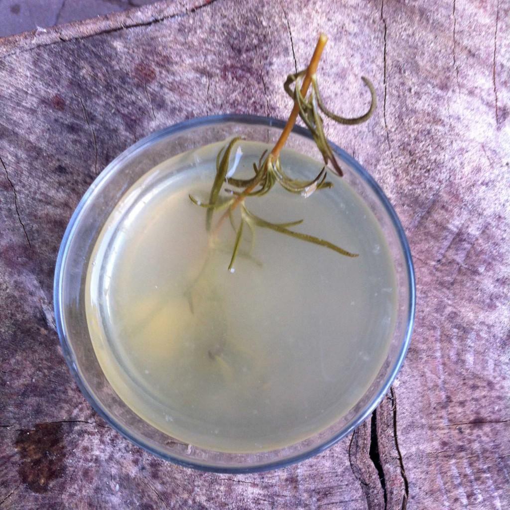 huisgemaakte limonade met rozemarijn